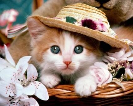 Cat-cats-2533807-1000-800